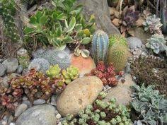 succulent rock garden rocks and cacti i can u0027t kill those so this