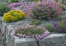 small rock gardens cori u0026matt garden