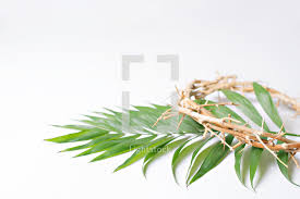palm fronds for palm sunday palm fronds palm sunday crown of thorns photo by