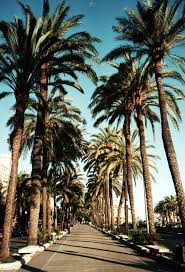palm trees make me happy beautiful photos palm