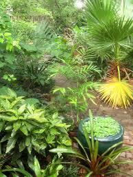 tropical texana garden book review the tropical garden by