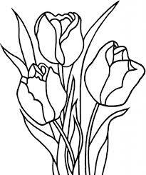 printable tulip coloring pages for kids download flowers new