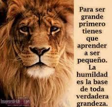 imagenes de leones salvajes gratis imágenes de leones con frases descargar imágenes gratis
