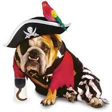 Funny Dog Costumes Halloween 13 Funny Pet Costumes Grandparents