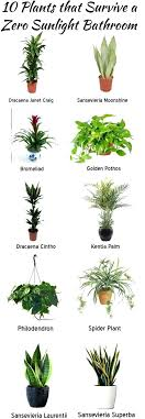 good houseplants for low light good houseplants that need very little light or spider plant
