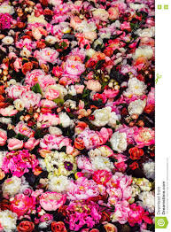 vertical image of beautiful flowers wall background stock photo