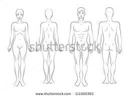 female anatomy stock images royalty free images u0026 vectors