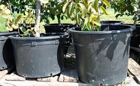 growing fruit trees in containers part 1 stark bro s