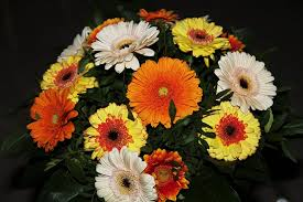 gerbera bouquet free photo autumn flowers gerbera bouquet free image on