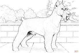 schnauzer terrier coloring page free printable coloring pages