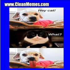 Clean Animal Memes - th id oip fmuna8klc7absqadgu0t whaha