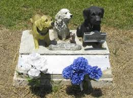 dog cremation pet cremation and pet ashes do your homework