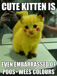 Cute Kitty Memes - cute kitten is even embarrassed of poos wees colours cheer up
