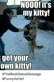 Meme Kitty - 000 its my kitty get your own kitty thebeststatusmessage