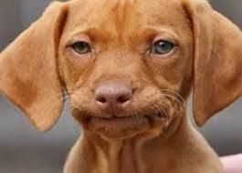 Frowning Dog Meme - lovely frowning dog meme frowndog blank template imgflip kayak