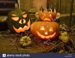 pumpkin cucurbita sp halloween u0027jack o u0027 lanterns u0027 lit on