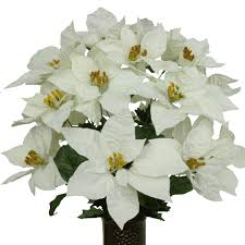 white poinsettia white poinsettia mix lg1041