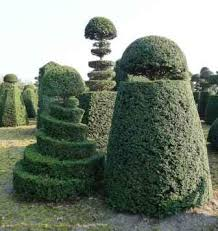 Yew Topiary - bespoke topiary unique topiary specimens from hedgeworx