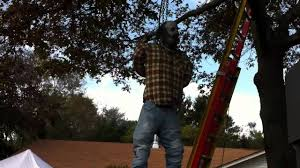 tree hang man youtube