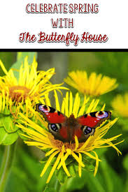 celebrating with the butterfly house comprehension connection