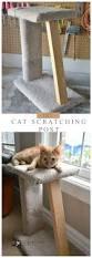 Cool Cat Scratchers Best 25 Scratching Post Ideas On Pinterest Cat Scratching Post