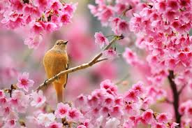 Flowers Plants by Nature Birds Animals Flowers Plants Depth Of Field Cherry