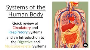 Human Anatomy And Body Systems Body Systems