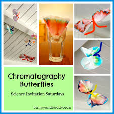 science for kids chromatography butterfly craft butterfly