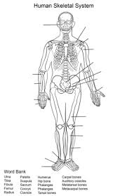 Human Anatomy Worksheet Human Skeletal System Worksheet Coloring Page Free Printable
