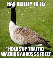 Goose Meme - scumbag canadian goose meme scumbag canadian goose funny humor