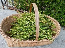 preserved boxwood wreath best 25 preserved boxwood ideas on boxwood wreath
