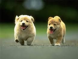 Imagenes de perros lindos y feos.