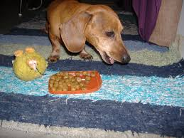 dachshund dog food can cause sickness and allergies