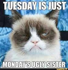 Happy Tuesday Meme - best tuesday memes 2018 edition