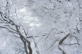 free photo frosty tree winter tree snow free image on