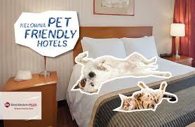 modern home design kelowna room simple pet friendly hotel rooms luxury home design modern