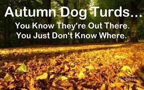 Autumn Meme - autumn dog turds funny pictures quotes memes funny images