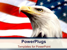 Bald Eagle On Flag Powerpoint Template Bald Eagle With American Flag White