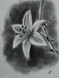 photos simple and beautiful pencil sketch on still life