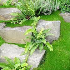 Low Light Outdoor Plants Best Ferns For Your Garden