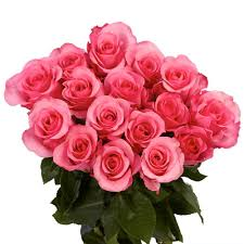 globalrose fresh pink color roses 250 stems orlando 250