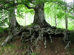 the meaning of trees in dreams wellbeing com au