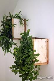 transform bare walls to bright indoor gardens with the versatile