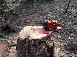 Felling Wedges How To Cut Down A Tree 6 Steps