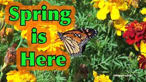 spring is here preschool song youtube