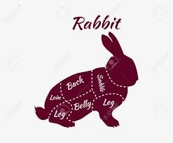 vintage rabbit vintage diagram guide for rabbit cutting vintage typographic