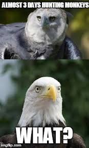 Funny Eagles Meme - a little harpy eagle know a bald eagle imgflip