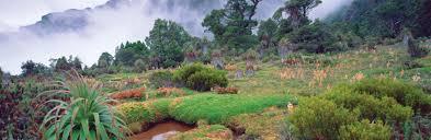 canadian native plants australia u0027s native plants