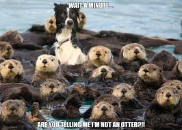 Confused Dog Meme - the dog is so confused right now can t figure what s the best