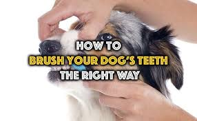 How To Brush Your Dog s Teeth The Right Way Think Puppy